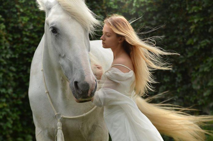 cheval-ami-dressage