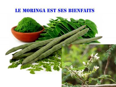 graines-de-moringa-oleifera-sur-la-sante