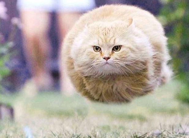 mon-chat-fait-de-laccrobatie
