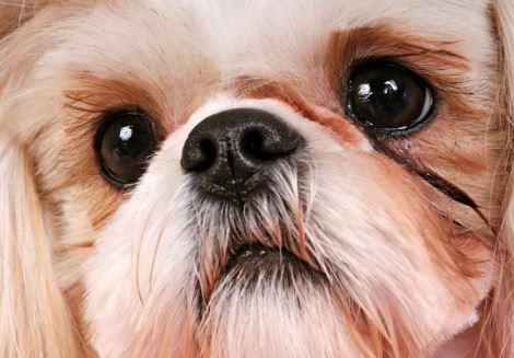 mon-chien-anxieux-que-faire