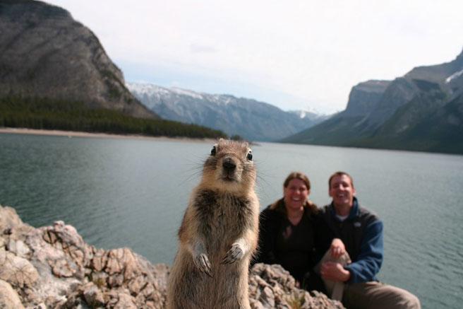 selfy-avec-animaux-ecureil